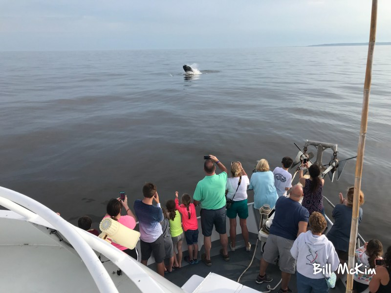 jersey shore whale watch june 2018 IMG_1279