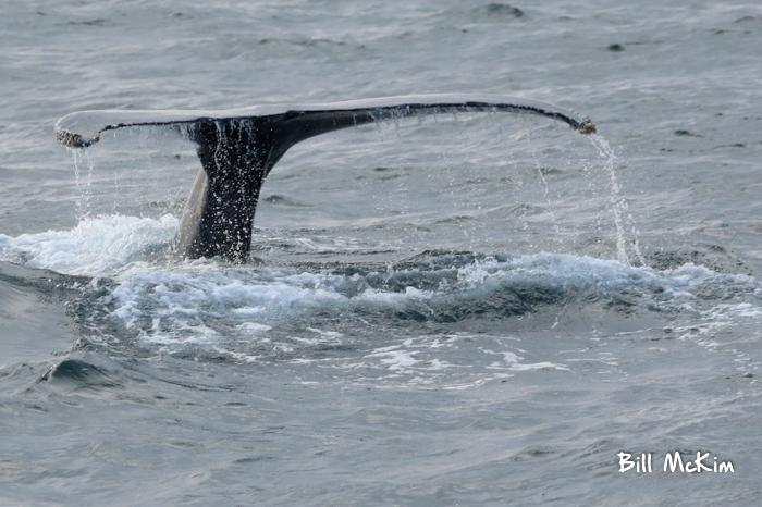 whale tail asbury park NJ