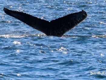 Jersey shore whale watch 2019 bill mckim