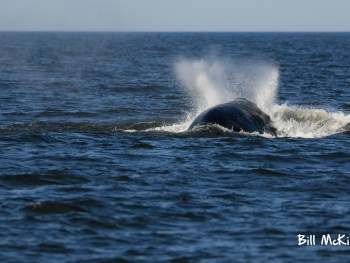 Jersey shore whale watch report June 27th 2019 photos