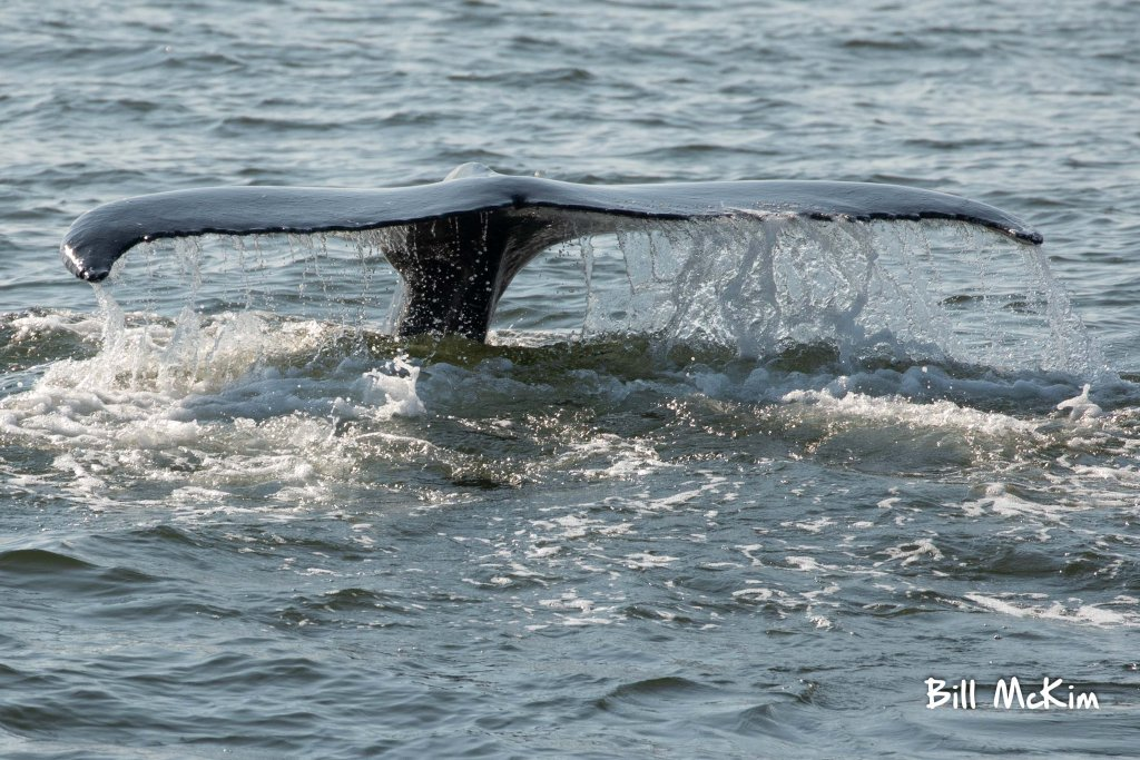 , July 24th Whale Watching Trip Photos, Jersey Shore Whale Watch Tour 2020 Season