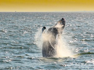 , Absolutely FANTASTIC day with Jersey Shore Whale Watch! Sept 22nd, Jersey Shore Whale Watch Tour 2020 Season