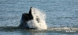 , whale watching near me, Jersey Shore Whale Watch Tour 2020 Season