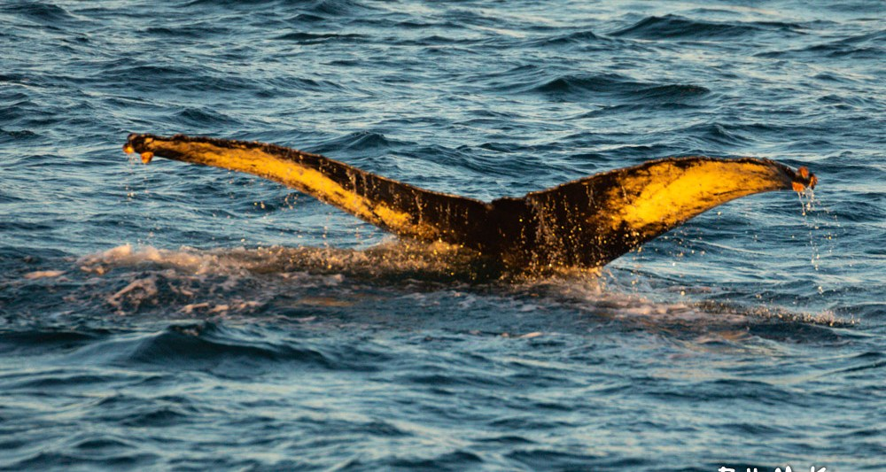 , November whale watching has been awesome, Jersey Shore Whale Watch Tour 2020 Season