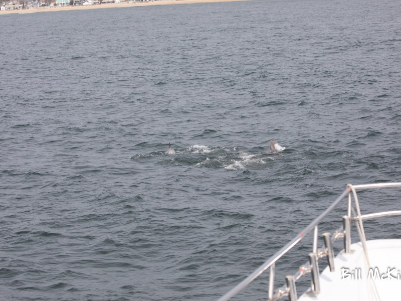 , June 3rd 2020 whale watching report Long Branch NJ, Jersey Shore Whale Watch Tour 2020 Season