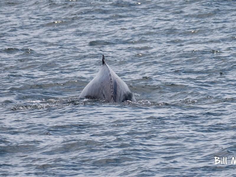 humpback whale watching tour Belmar marina