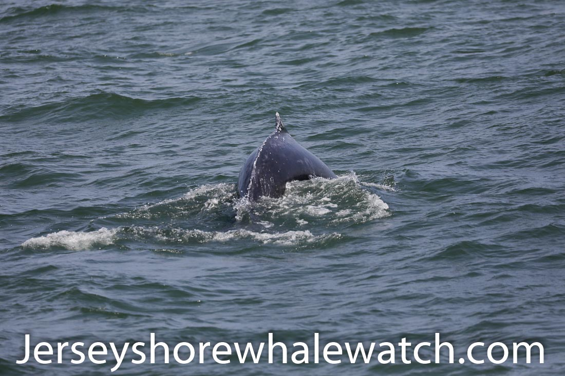 Jersey shore whale watch July 6 review 2020 (35 of 37)