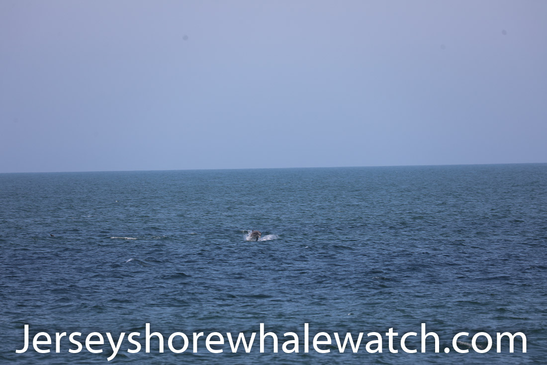 Jersey shore whale watch July 6 review 2020 (5 of 37)