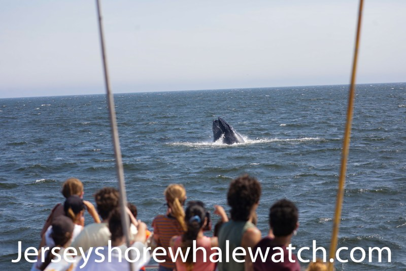 , July 19th trip 3 Whales today and one breached over 30 times, Jersey Shore Whale Watch Tour 2020 Season