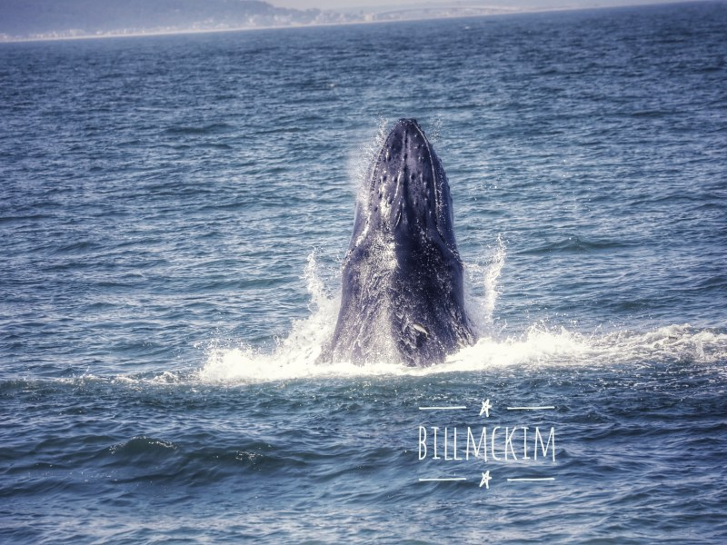 , Wednesday afternoon great whale watching trip, Jersey Shore Whale Watch Tour 2020 Season