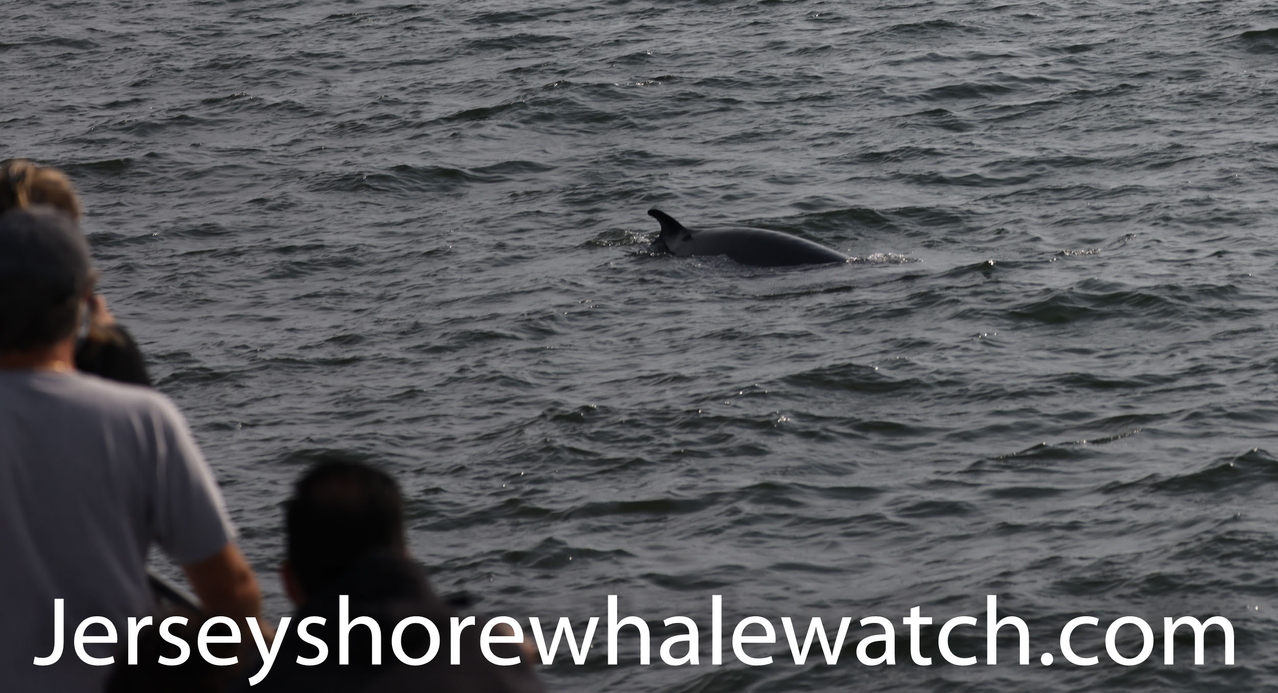 , Whales September 25th trip: Minke and Humpback, Jersey Shore Whale Watch Tour 2020 Season