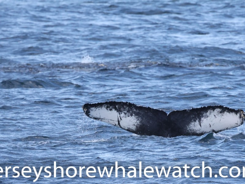 """""""Canon R5 Whale Watching Jersey Shore whale watch Tour (5 of 1618)"""""""