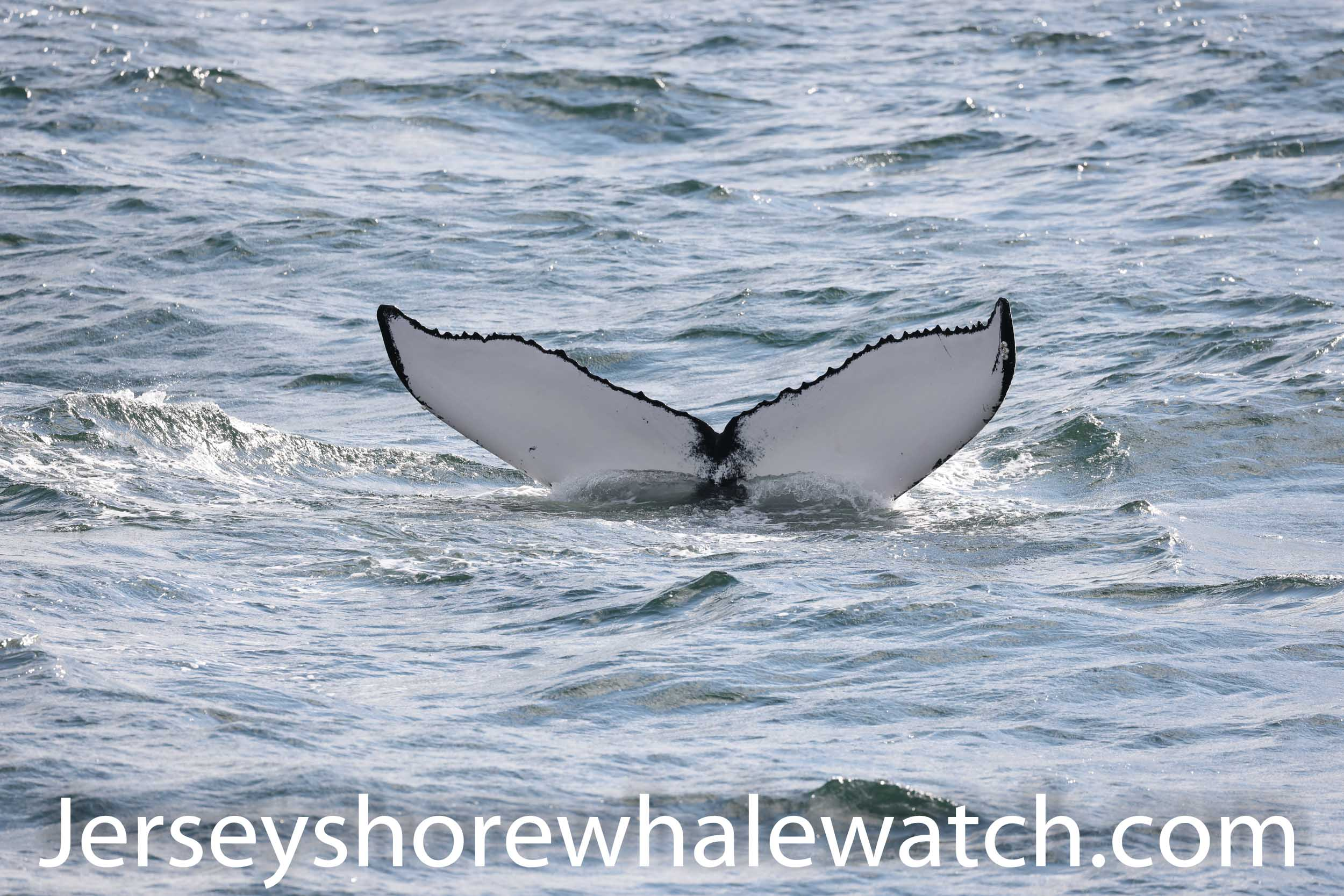 , Amazing Sunday Funday Whale Watching Belmar, Jersey Shore Whale Watch Tour 2020 Season