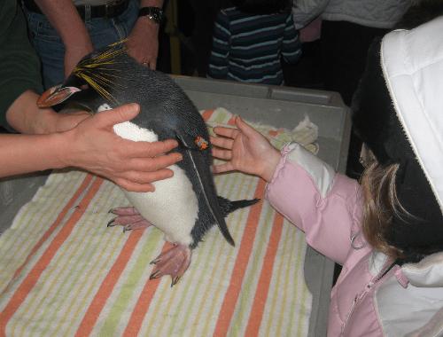 CMJ_penguin.png