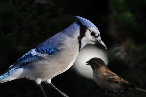 Barking up the Muse Tree | jespah | Janet Gershen-Siegel | The Sparrow and the Blue Jay | Animal Lovers