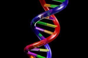 Barking up the Muse Tree | Janet Gershen-Siegel | jespah | DNA