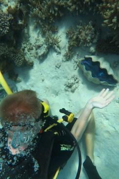 Giant clams!