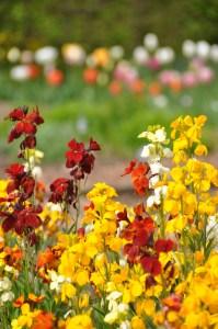 Osterley-Park-National-Trust-Property-Jess-Does-Blog
