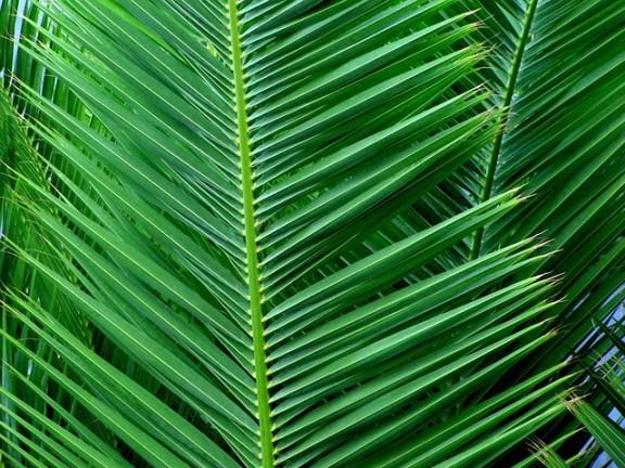 palm-54467_640