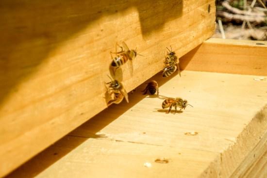 RTC Bees-3