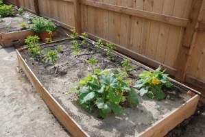 Adventures in Gardening Update!