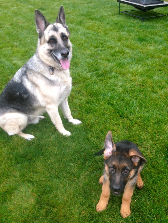 Kaiser and Otto