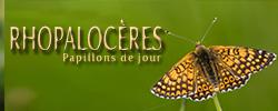 Rhopalocères-icone