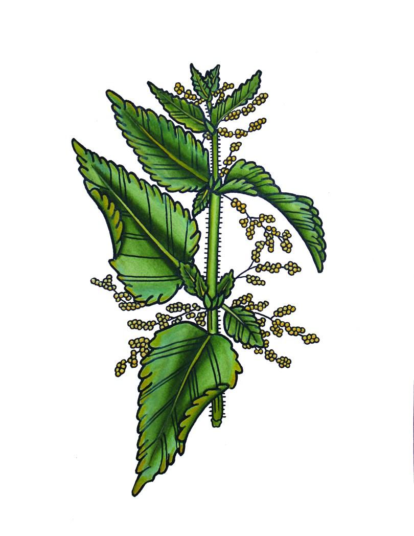 The Herb Walk with Jessica Baker – Musings on Herbalism