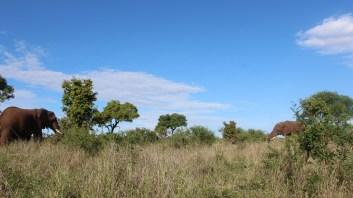 KrugerSAT36