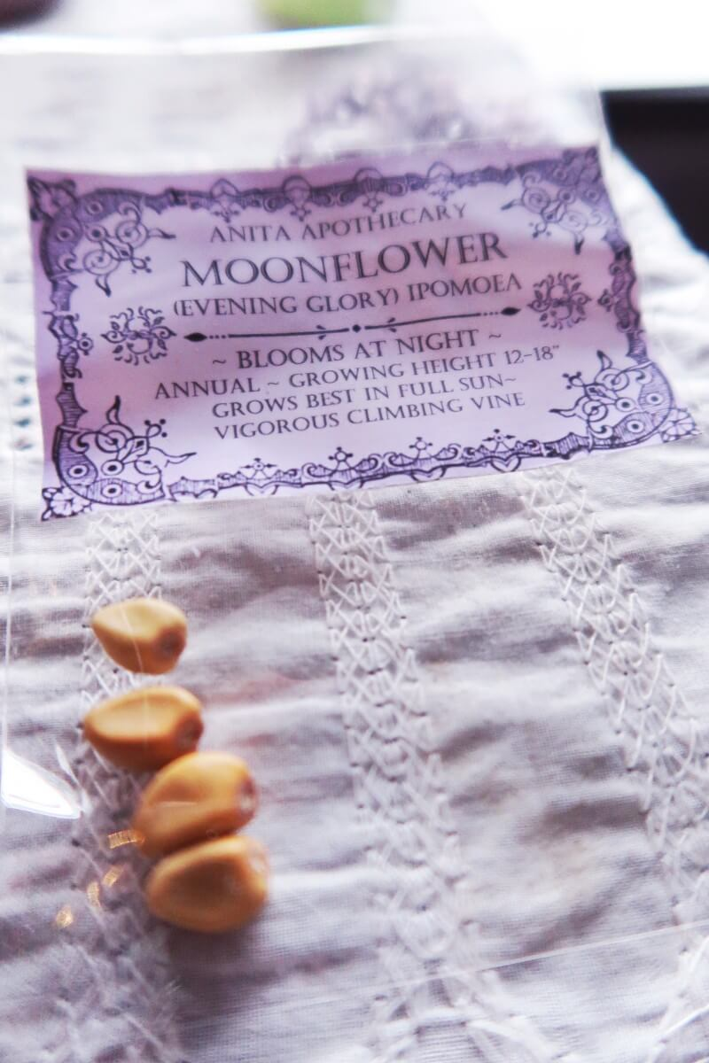 Moonflower seeds
