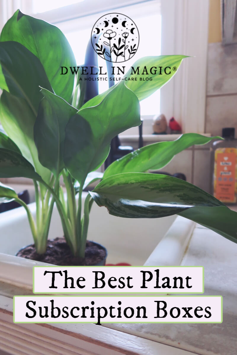 Plant subscription box