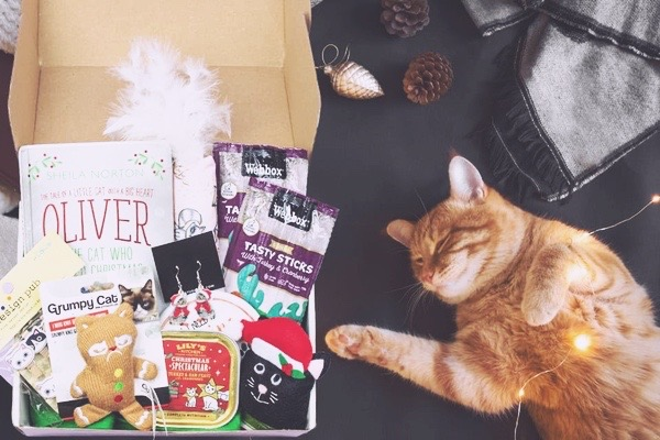 Cattitude cat subscription box