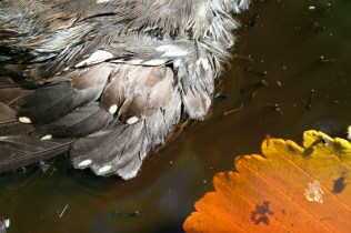 wing leaf dead