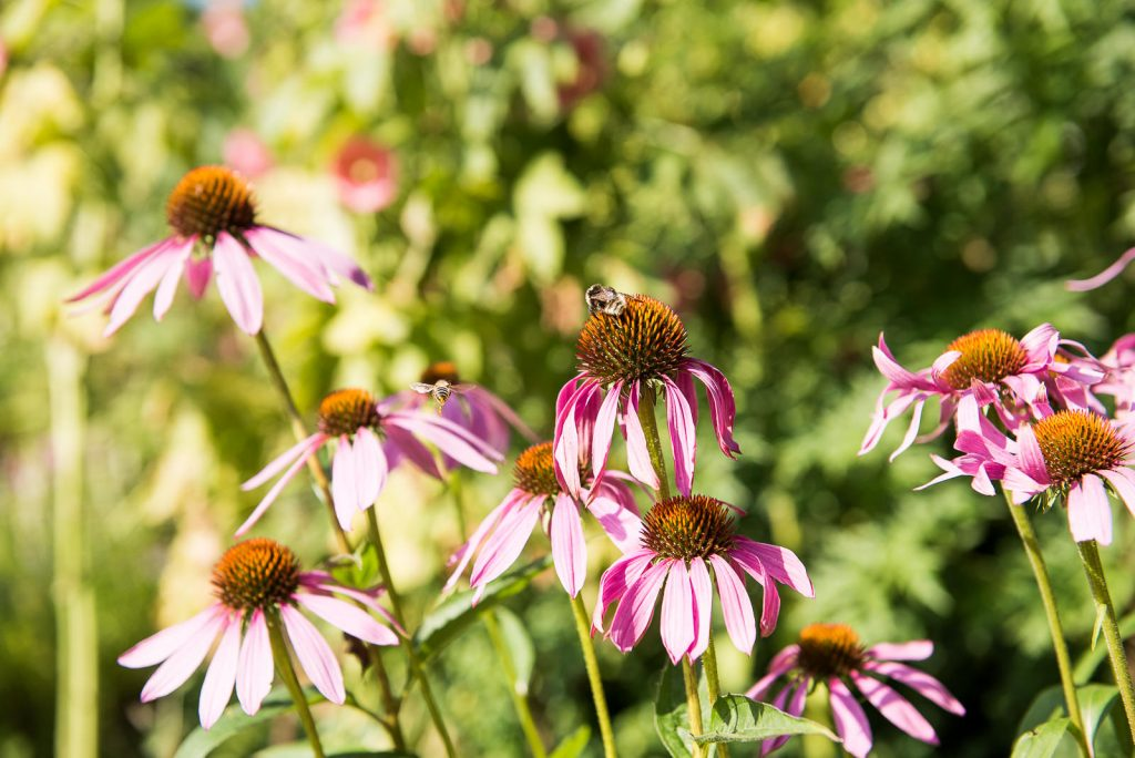 Eco Friendly Wedding, Wildflowers and Bumble Bees, Wedding Advice