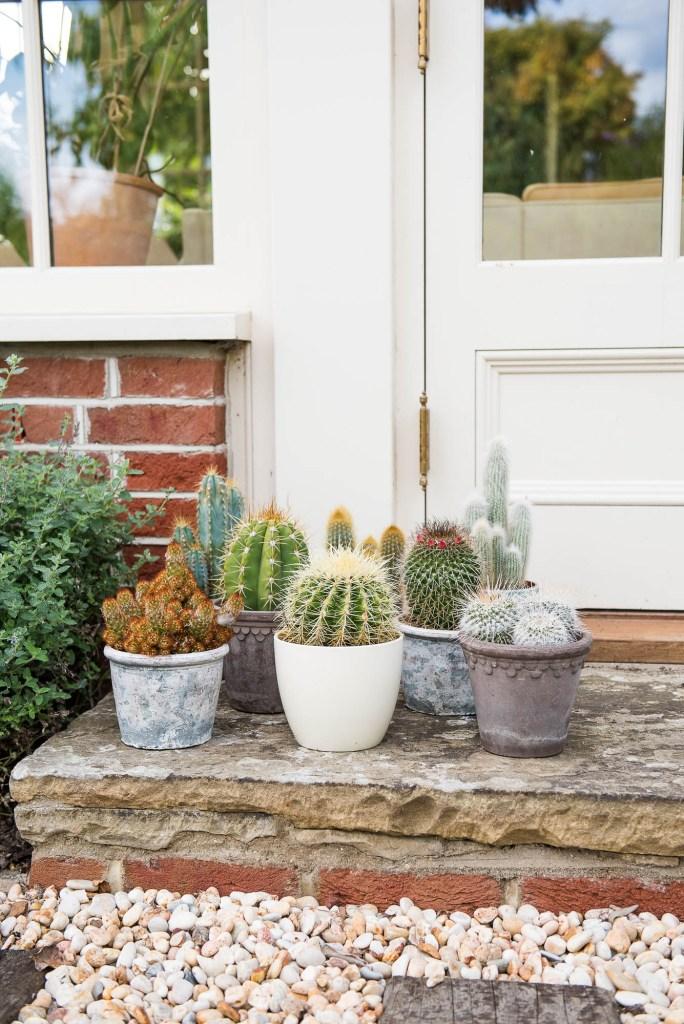Outdoor Wedding Photography Surrey, Cute Cactus Display