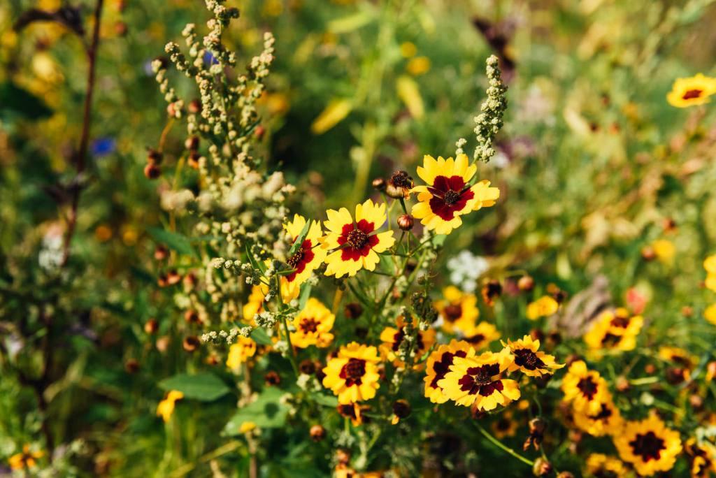 Flowers in Greenwich Park London