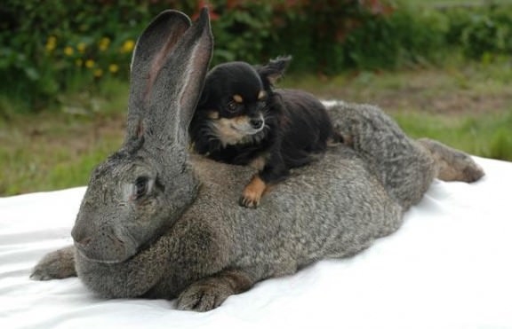 rabbit_1483166i