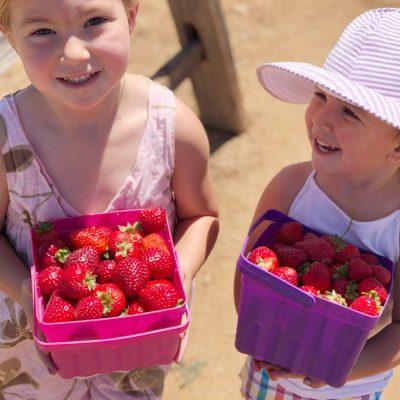 Kenny's Strawberry Farm near San Diego, CA