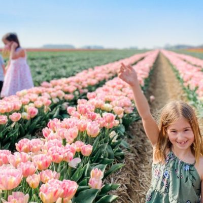 Where to Find Tulip Fields in Germany