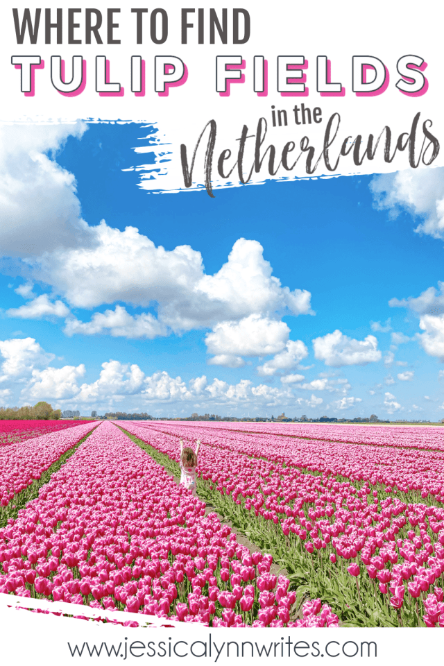 Looking for tulips in the Netherlands? Save this post and go off the beaten path where you can see literal dozens of tulip fields!