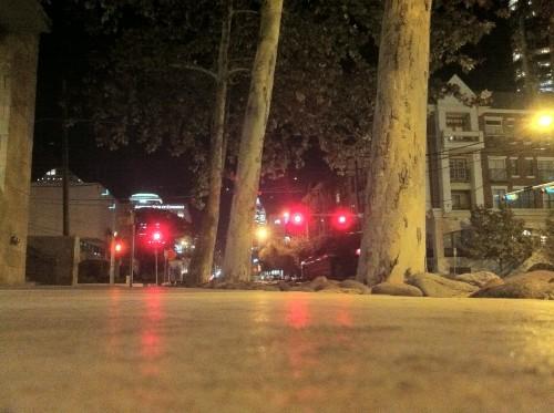 trees on 5th