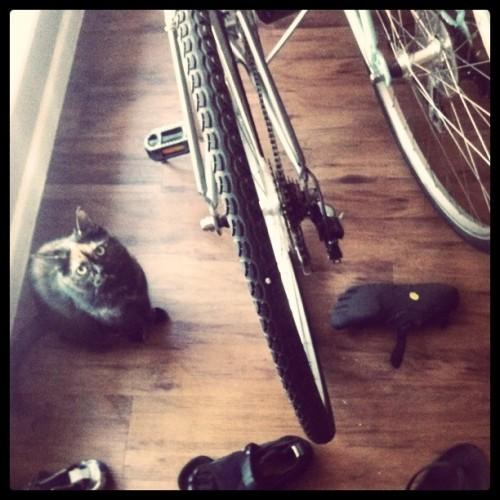 pwny bikes