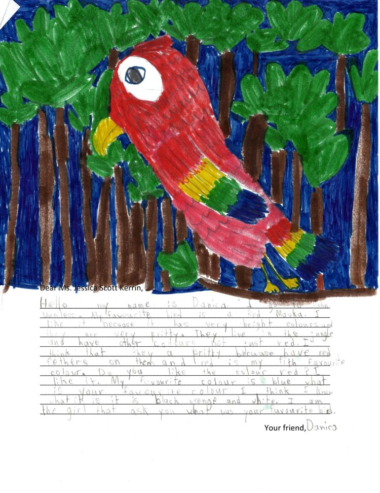 Child's drawing of a red bird in the jungle