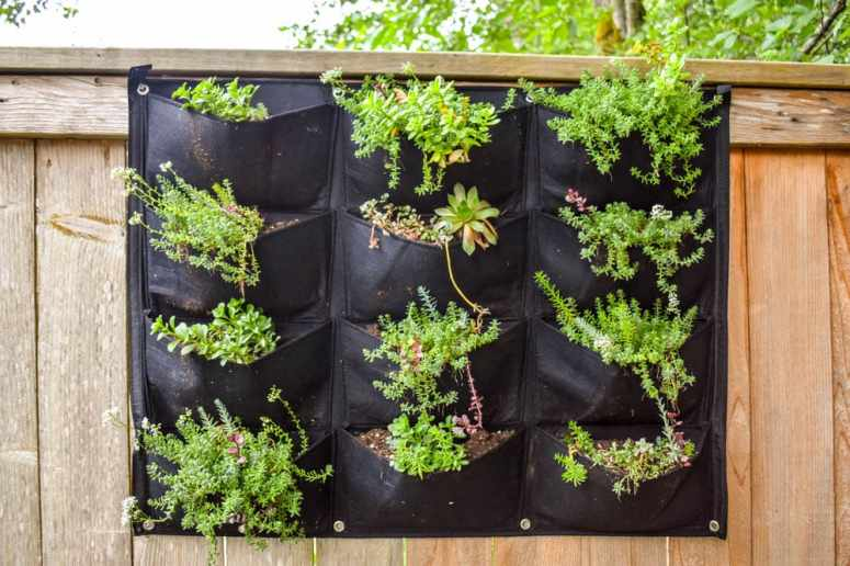 photo of vertical garden planter hanging on fence