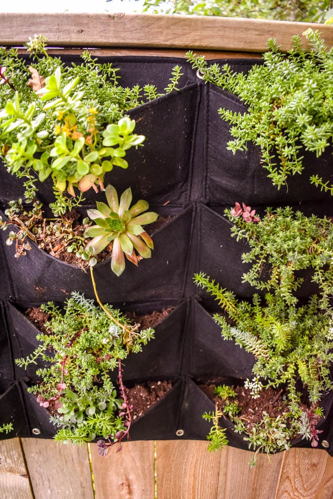 photo of vertical garden with sedums and succulents