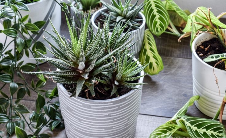DIY Modern Indoor Planters!