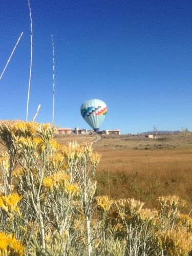 There are a TON of balloons in Park City. One landed right outside the COE!