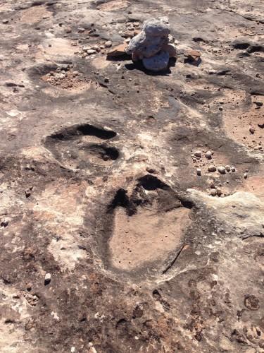 Dinosaur tracks!!!