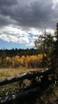 Colorado aspen run