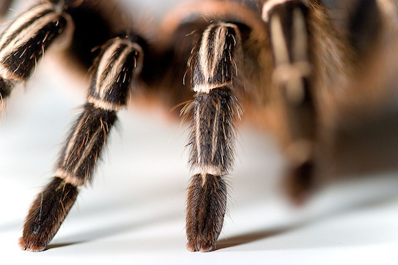 Customs Officials Find Hundreds Of Tarantulas Inside Luggage • Jessie on a  Journey | Solo Female Travel Blog